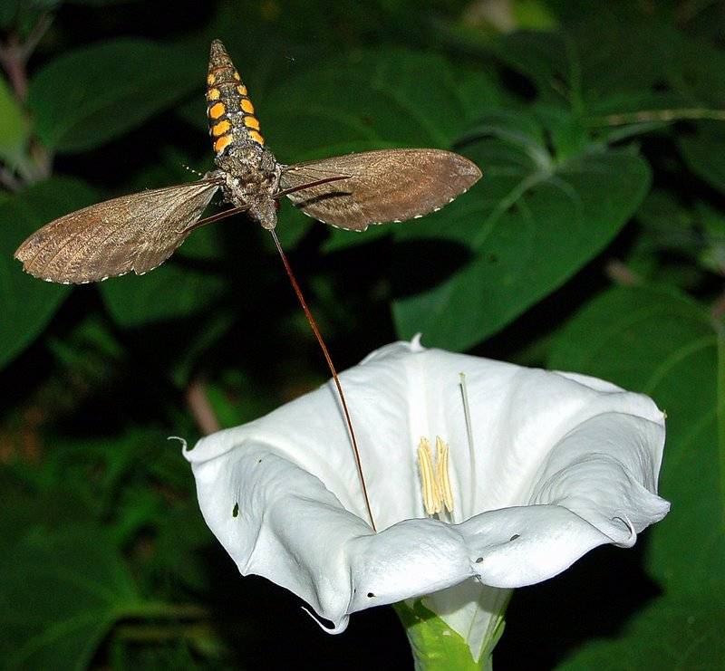 moth insect flower pollution