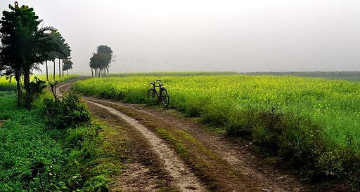 agriculture_farm_near_ruppur_village_west_bengal_india_december_2013