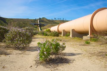 wildflowers-and-pipeline