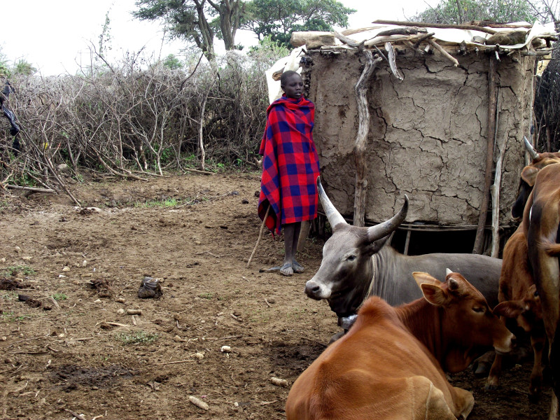 Herders use of a No tsetse fly route through to Africa